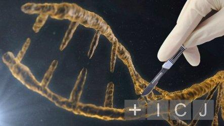 В США будут редактировать геном человека с помощью системы CRISPR/Cas9