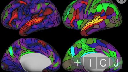 Нейробиологи создали новую карту мозга с неизвестными ранее областями