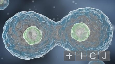 Рак можно вылечить с помощью «химической» сигнализации